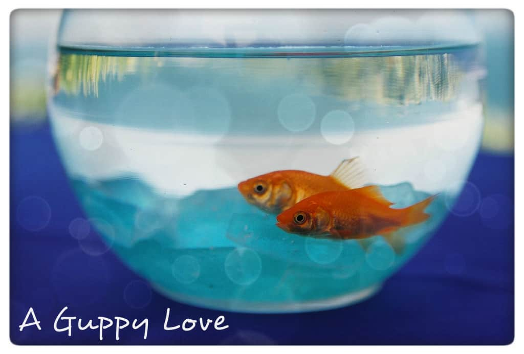Real love, and goldfish