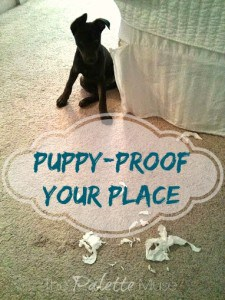 Puppy-Proof-Your-Place