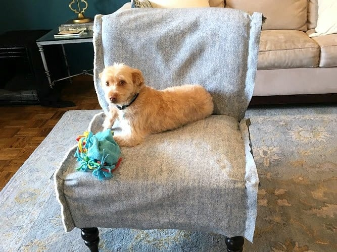 Dog sitting on unfinished chair