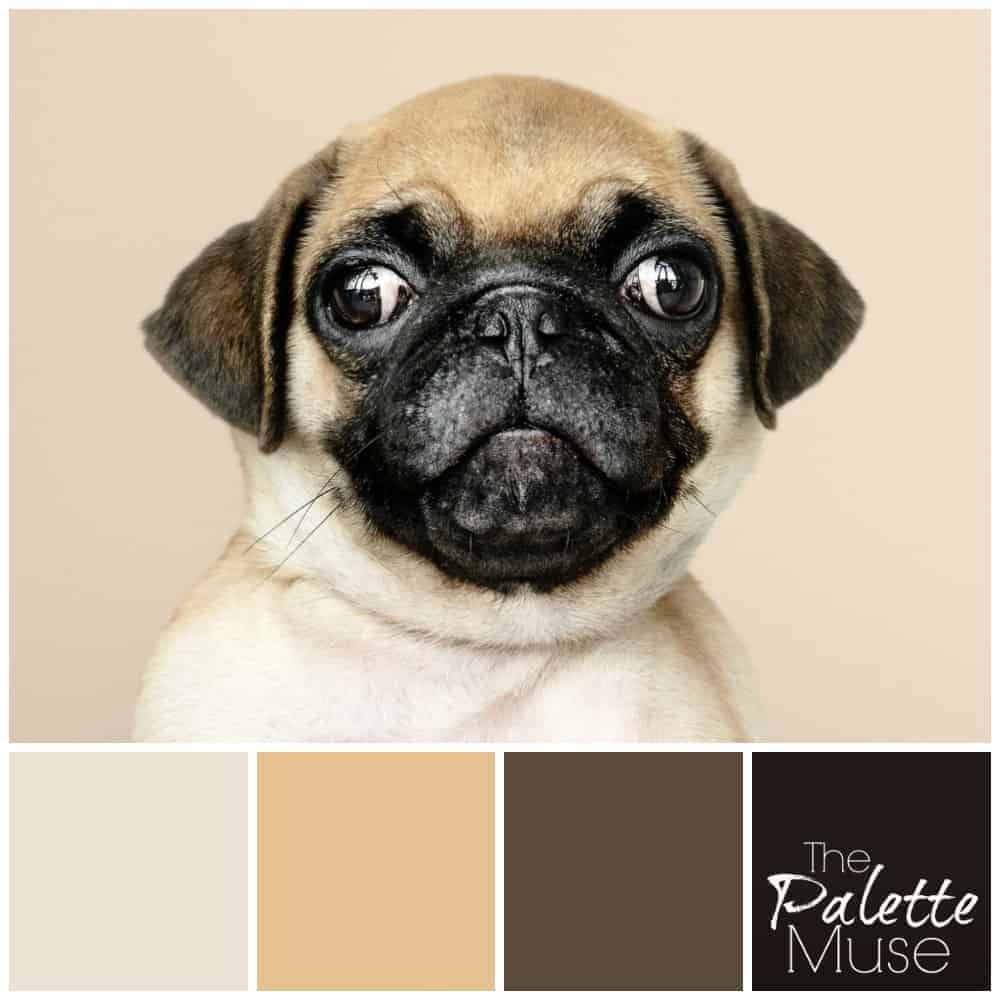 A sweet pug face lends its fawn and brown colors to this neutral palette. #colorpalette #colorinspo #thepalettemuse