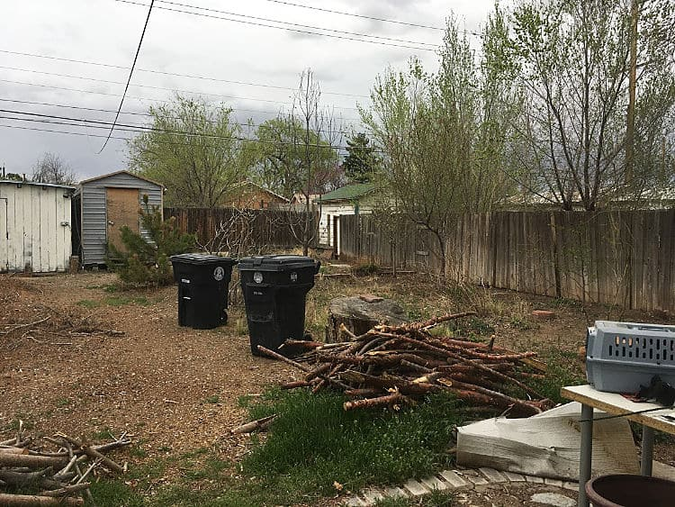 Messy backyard filled with weeds, tree branches, and trash cans