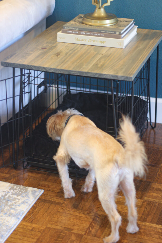 Our dog sniffing at his new crate table cover